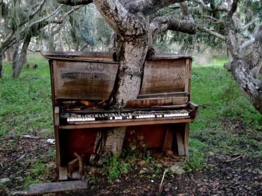 A tree growing through an abandoned piano