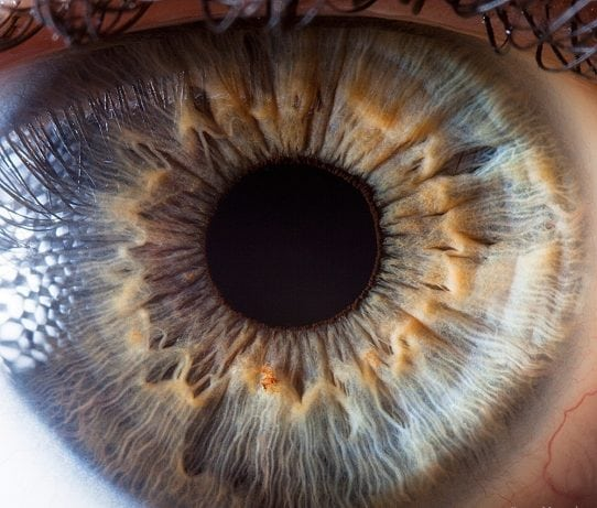 The iris of the human eye at close range