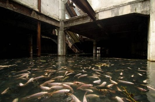 flooded abandoned mall with fish bangkok thailand