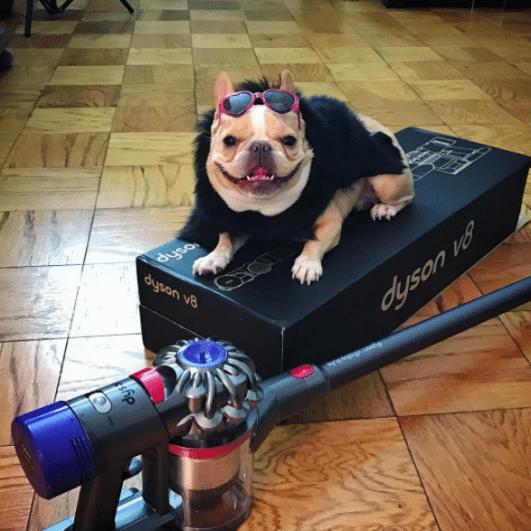 chleo famouse dog