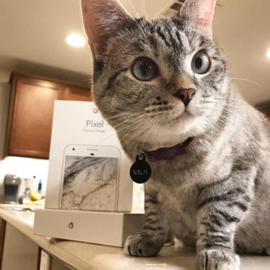 nala famous cat,Instagram cat