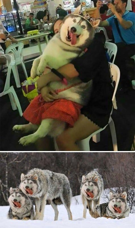 Photoshop battles