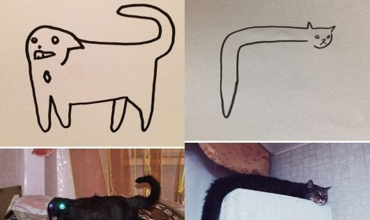 22 funny cat drawing