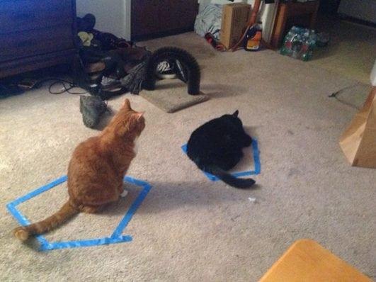 Cat Circles